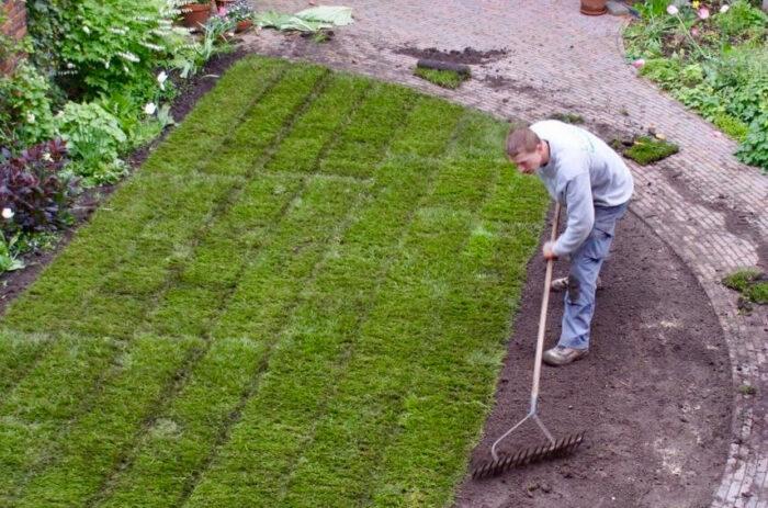 Nieuwe graszoden met een afgerond lijnenspel